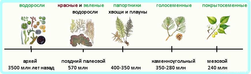 эволюция растительного мира