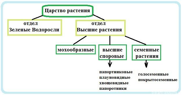 Царство растения | Дистанционные уроки Классификация Животных Таблица