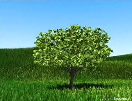 rastenie Почему растения поворачиваются к свету?