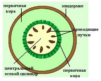 поперечный разрез