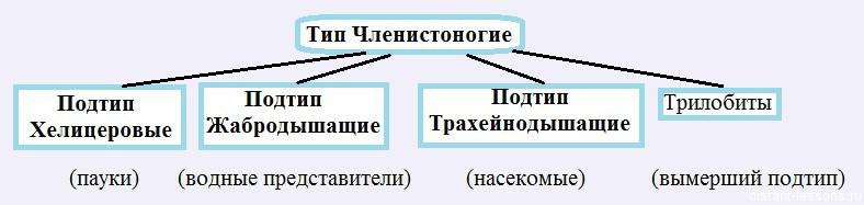 klassifikacia chlenistonogih Членистоногие