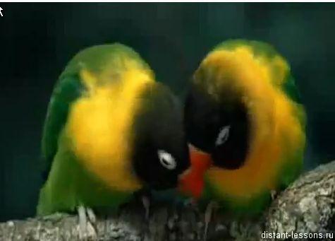 размножение птиц