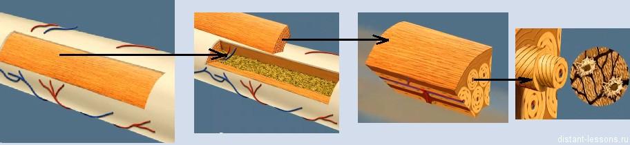 kostnaja tkan Соединительная ткань