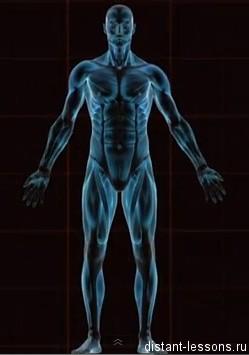 organizm Соединительная ткань