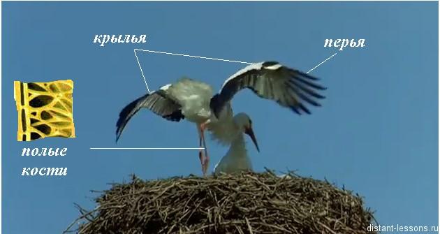 pticy harakternye cherti Птицы