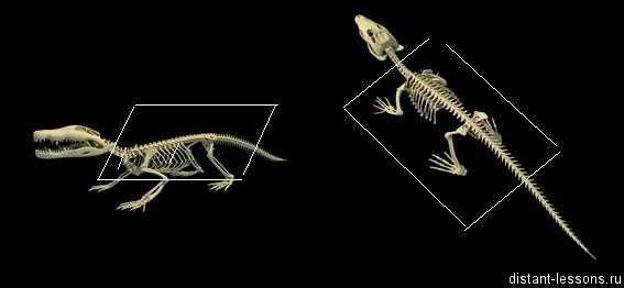skelet Пресмыкающиеся, рептилии