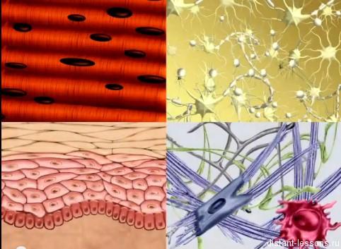 ткани животных