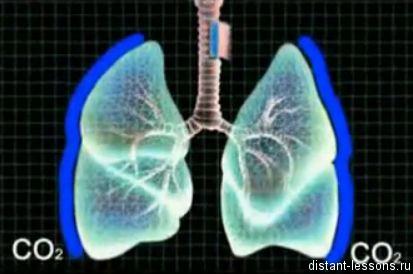 dyhatelnaja sistema cheloveka Дыхательная система человека