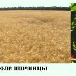 Характеристика агроэкосистемы