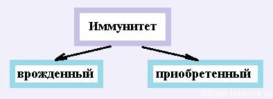 immunitet cheloveka Иммунитет человека