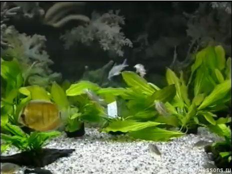 komponenty ecosistemy Биогеоценоз и экосистема