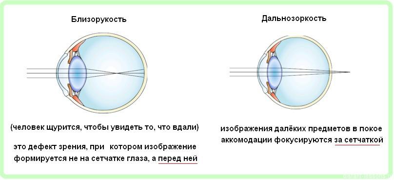 Органы чувств строение глаза