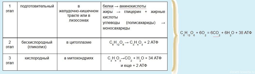 схема энергетического обмена