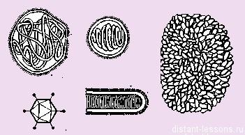 форма тела вирусов