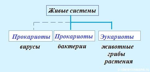 таблица живых систем
