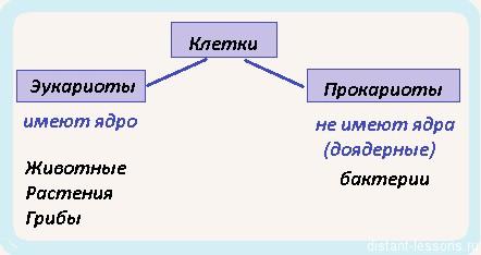 классификация клеточных организмов
