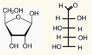 открытая и циклическая форма