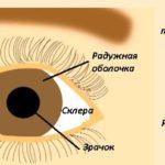Органы чувств человека. Строение глаза