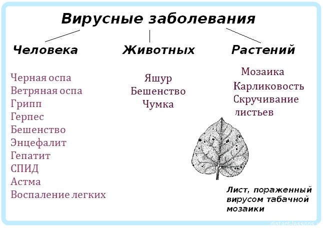 биологические вирусы
