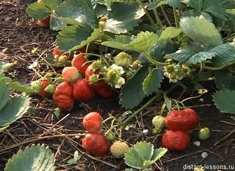 вегетативный способ размножения растений