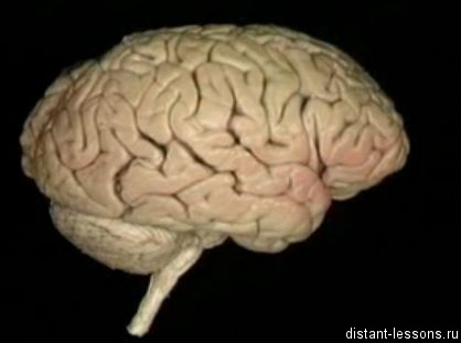 центральная и вегетативная нервная система