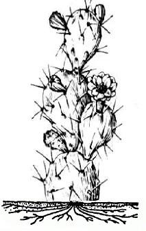 вопросы по ботанике