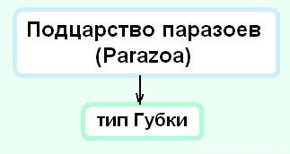 характеристика типа Губки