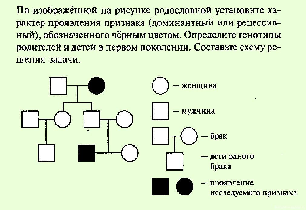 Схемы составления родословной примеры
