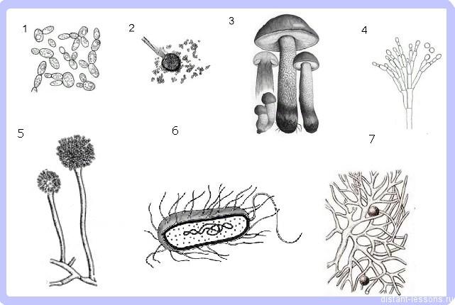 тест на тему грибы