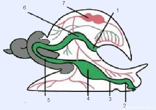 тест моллюски