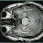 Обучение и мозг