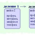 Деление клетки мейоз