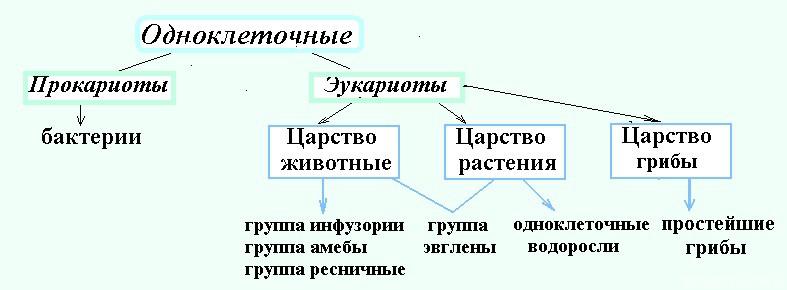 Одноклеточные организмы — список с названиями и примерами || Оомикота одноклеточные или многоклеточные