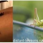 Особенности строения насекомых