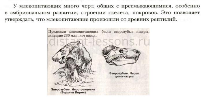 характеристика млекопитающих