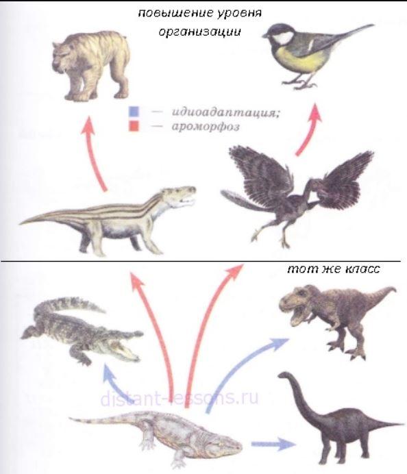 пути эволюции