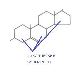 липиды