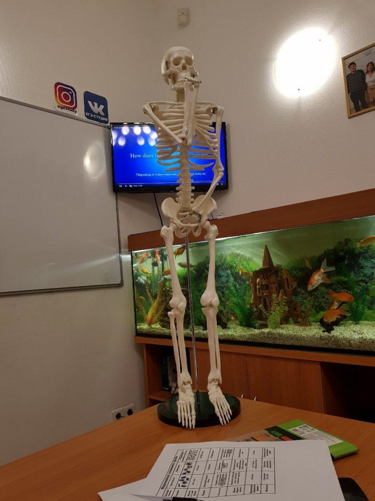 подготовка к ОГЭ и ЕГЭ по биологии