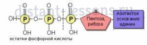 Этапы клеточного дыхания