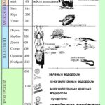 Эры и периоды Земли