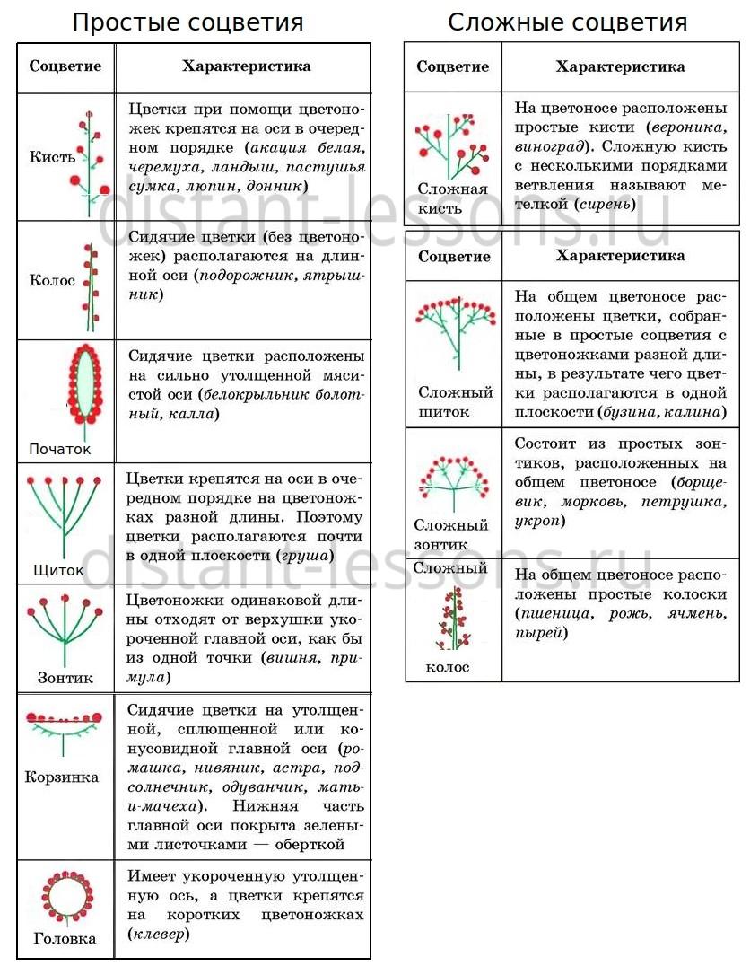 формулы цветков