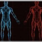 Вопросы по анатомии
