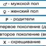 Схема родословной семьи