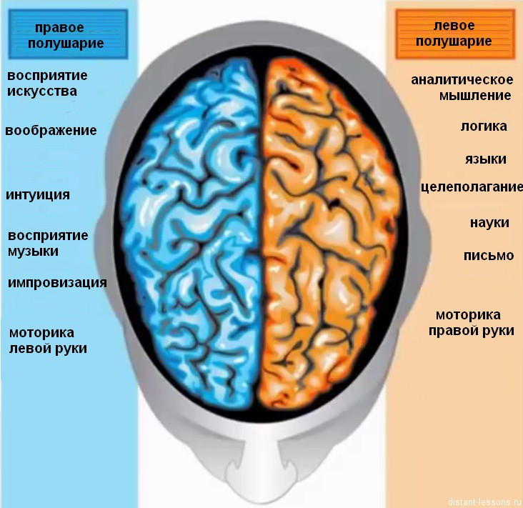 an analysis of functions of the two sides of the human brain Start studying parts of the brain and their functions learn vocabulary sequential analysis: communication between the two hemispheres.
