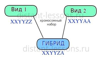 межвидовая гибридизация